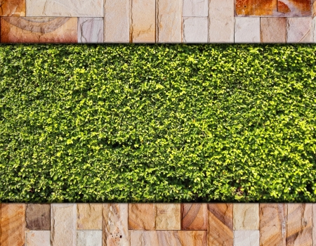Stone brick and green leaf for background photo