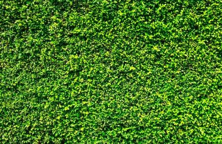 緑の葉の背景の壁のテクスチャ