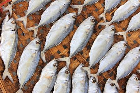 conservacion alimentos: Primer plano pescado seco bajo la, conservaci�n de alimentos sol