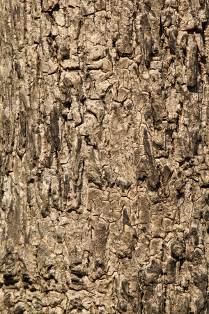 bark background texture: Tree bark background texture pattern