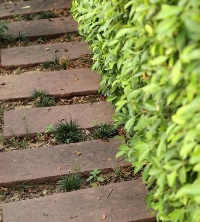 stone path: Stone path in the garden with tree Stock Photo