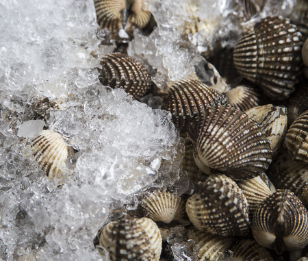 Fresh cockles on ice in the market