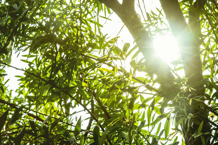Sunlight ray with tree branch background in the garden