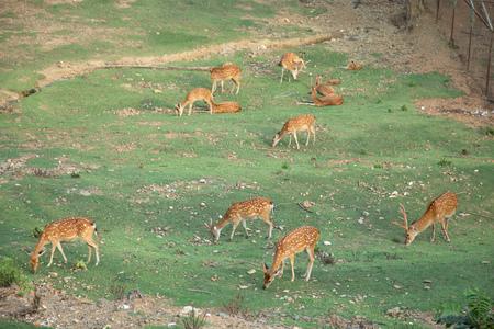 Group of deer feeding grass in zoo