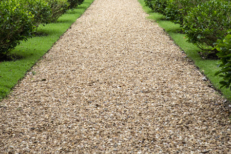 Stone path way with plant in garden