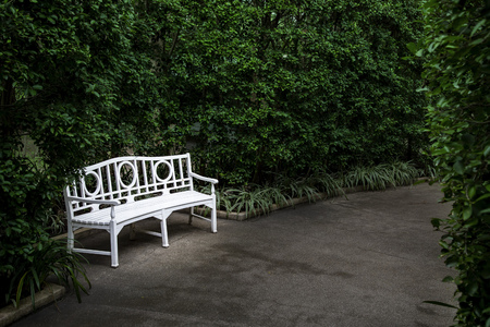 White bench with bush in the garden 写真素材