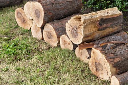 Freshly cut pine wood logs on green leaf 写真素材