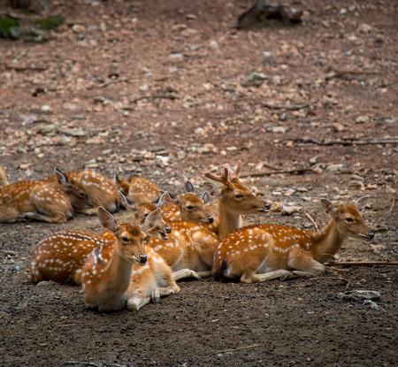 Group of deer sitting in zoo