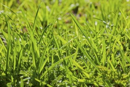 green juicy grass in the spring nature close-up Stock Photo