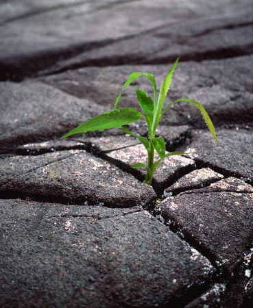 the green sprout of the dried black earth is growing out of the cracks   photo