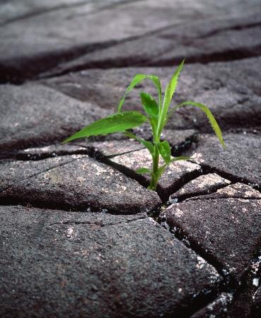 zelený výhonek ze sušeného černého zemi roste z trhlin Reklamní fotografie - 19935329
