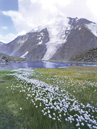 mountains altai flowers lakes glaciers clouds green grass