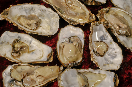 oysters raw recognized  red background closeup top Stock Photo