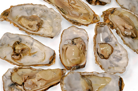 oysters raw recognized  white  background closeup top Stock Photo