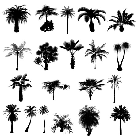frond: collection of silhouettes of palm trees Stock Photo