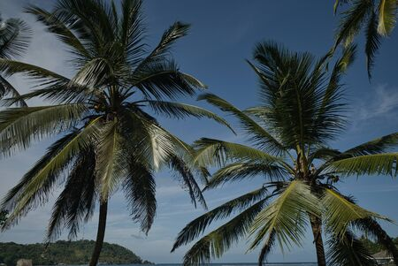 Dream landscape on the Caribbean side in Panama, with coconut trees and a lonely jetty. Wanderlust calls