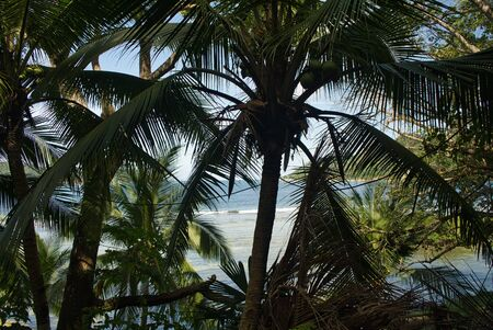 In Panama: photographed by palm fronds on a small island in the Caribbean Sea - wanderlust calls
