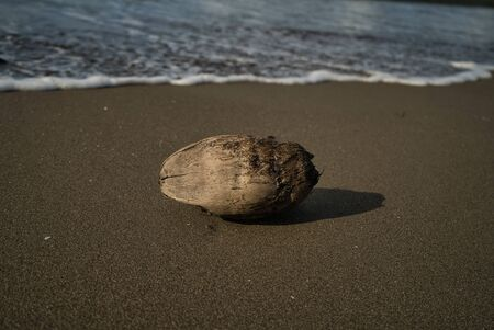A stranded coconut on the deserted beach of Panama on the Caribbean side with focus on the foreground and the sea in the background.