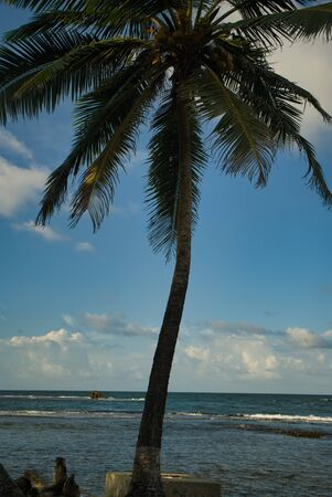 Somewhere in nowhere on the lonely beach on the Caribbean side in Panama with dark sand and coconut trees, wanderlust calls