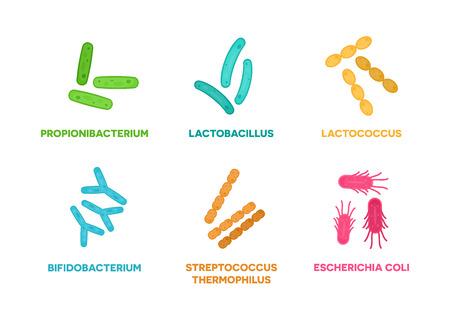 Probiotics. Set of good bacteria and microorganisms concept isolated on white background. Propionibacterium, lactobacillus, lactococcus, bifidobacterium, streptococcus thermophilus, escherichia coli 스톡 콘텐츠