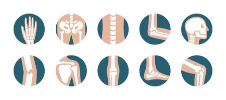 Conjunto de articulaciones y huesos humanos. Vector iconos de rodilla, pierna, pelvis, escápula, cráneo, codo, pie y mano. Símbolos ortopédicos y esqueléticos sobre fondo blanco. Ilustración de vector