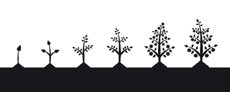 Plant growth stages silhouette on white background. Illustration of planting vegetables.