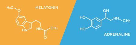 Vector illustration flat design of melatonin and adrenaline hormone symbols. Human body hormones molecular chemical formula. 向量圖像