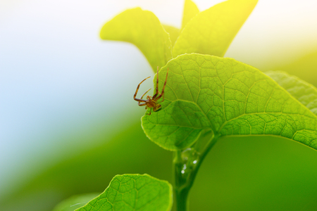 macro of the green spider on green leaf. Stock Photo