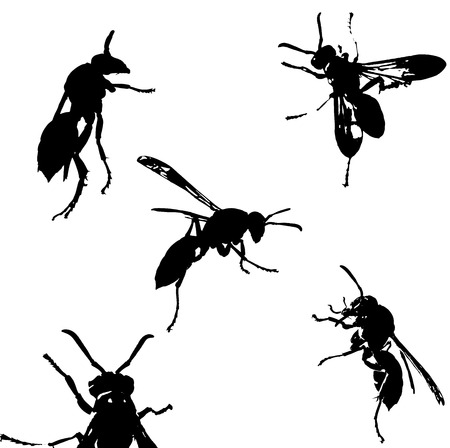 wasp: illustration with wasp silhouettes collection isolated on white background Stock Photo