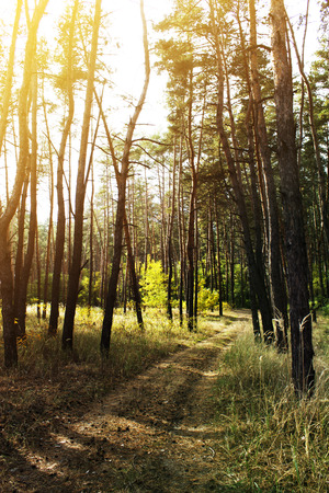 Autumn forest scenery with rays of warm light Stock Photo