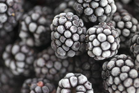 Blackberry berries covered with hoarfrost. close up bramble covered with hoarfrost