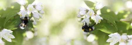 Summer, spring fairy background. Large bumblebee in flowers.Floral image for spring background or banner template 免版税图像