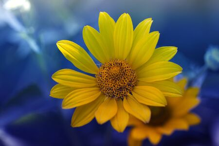 cute yellow summer flower.delicate yellow flower. fragile delicate yellow flower