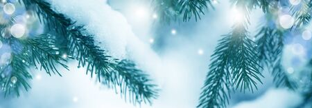 Close-up of pine tree covered with snow frost in winter. Christmas and New Year holiday background with copy space. Fir branches in snow and festive bokeh. Wallpaper, banner.