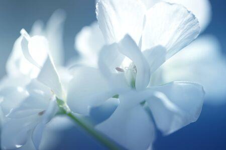 Close up of white flower 版權商用圖片