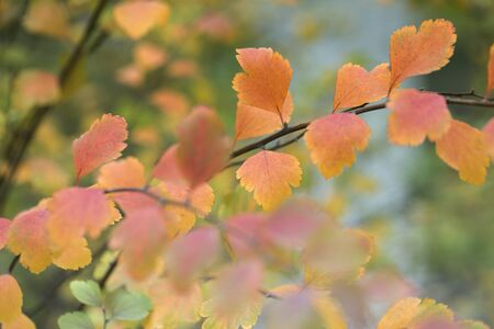 Autumn leaves on the sun and blurred trees . Fall background. 版權商用圖片
