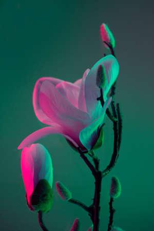 Colorful trendy design magnolia bloom on glowing neon effect 免版税图像