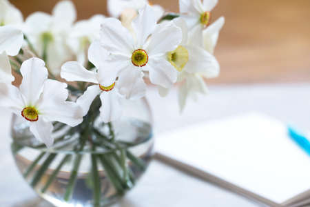 glass vase with daffodils at the table. Bouquet of many white daffodils in glass vase on table