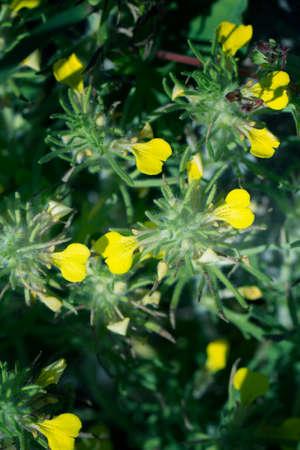 small yellow summer flowers in a garden 免版税图像