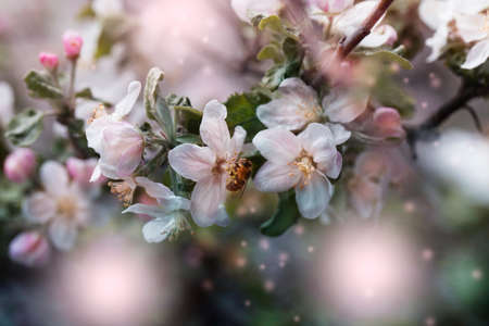 bee on a white flower on a tree.