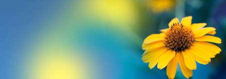 yellow summer flower. Banner. Stock Photo