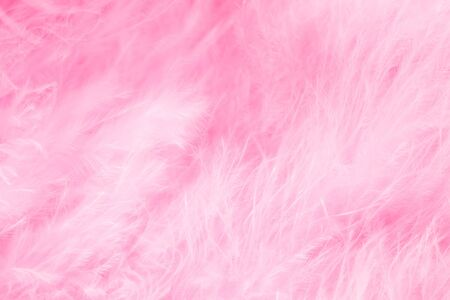 Macro of pastel bird fluffy feathers in soft color and blur style for background Stockfoto