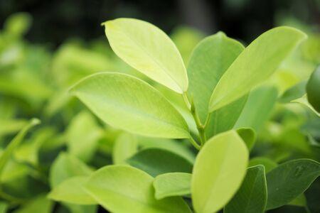 Zielony liść natura na zieleni na tle. nieostrość Zdjęcie Seryjne