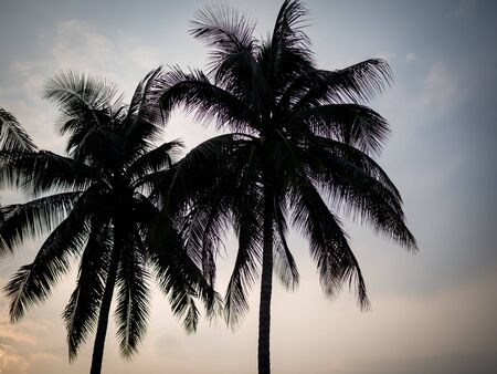 Silhouette of coconut palm trees in dark sky for background Banco de Imagens