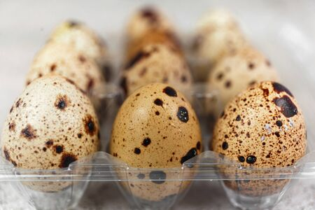 Easter or spring background with small fresh quail eggs. Ecoproduct. Quail eggs on concrete gray background.
