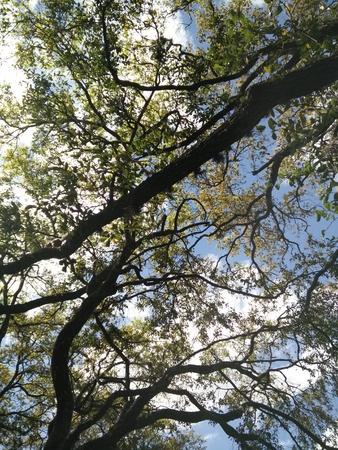 Tree close up 版權商用圖片