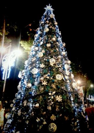 huge christmas tree: White and Blue Shining Huge Christmas Tree  Stock Photo