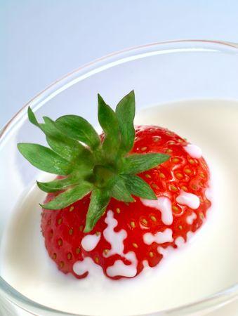 Saftige Erdbeeren Eintauchen in Glas Milch Standard-Bild - 5453379