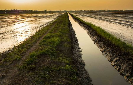 watercourse: the watercourse between two rice field Stock Photo