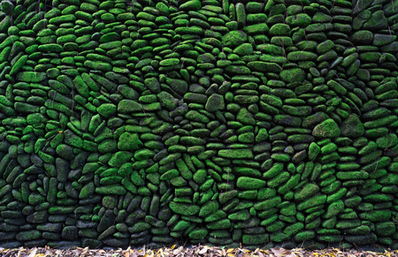 a high wall of rock that covered by green moss
